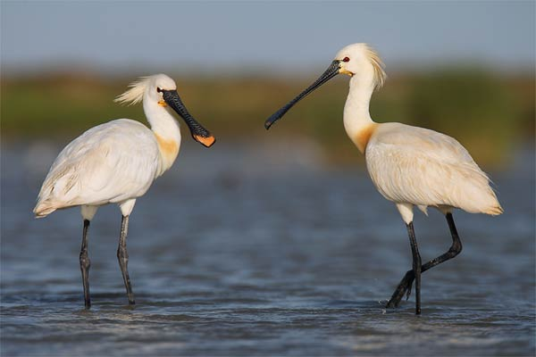 Aves de acuíferos de la Bahía de Cádiz