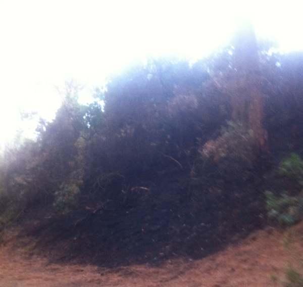 Qu hay detr s de los incendios al parque de las canteras puerto real hoy puerto real hoy - Las canteras puerto real ...
