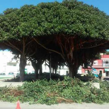 Poda de árbolado en La Jarcia