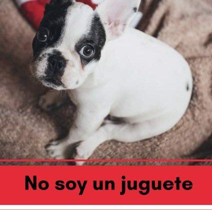 Cartel de la Campaña Navideña de Veterinarios en Cádiz