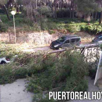 Árbol caído en el Hospital de Puerto Real por el viento.