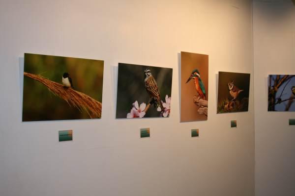 """Fotografías de la exposición, """"Aves""""."""
