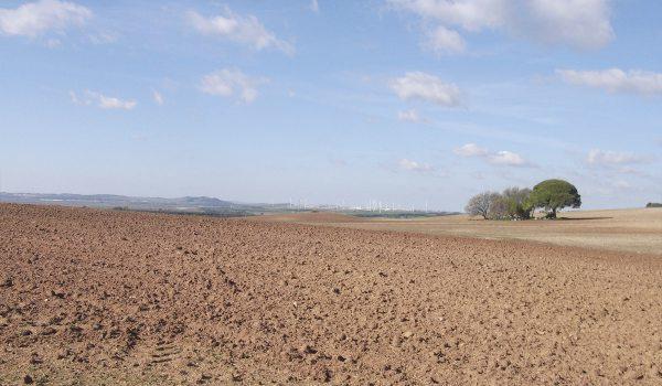 Terreno donde irá instalada la planta de Ansasol en Puerto Real.