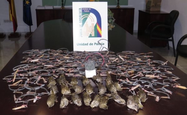 Trampas para la caza ilegal de aves protegidas.