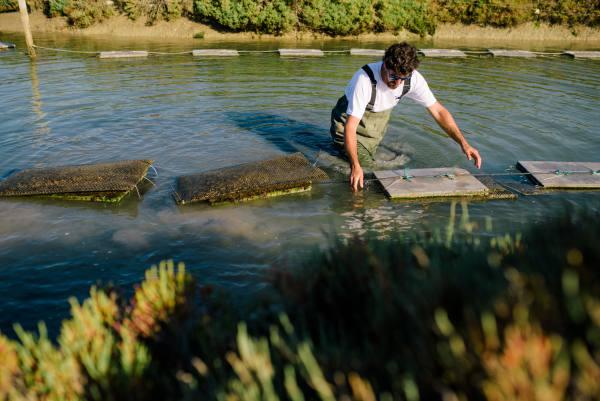Cultivo de la ostra en Cádiz