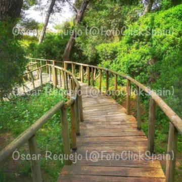 Puente en el Pinar de la Mariana (Óscar Requejo)